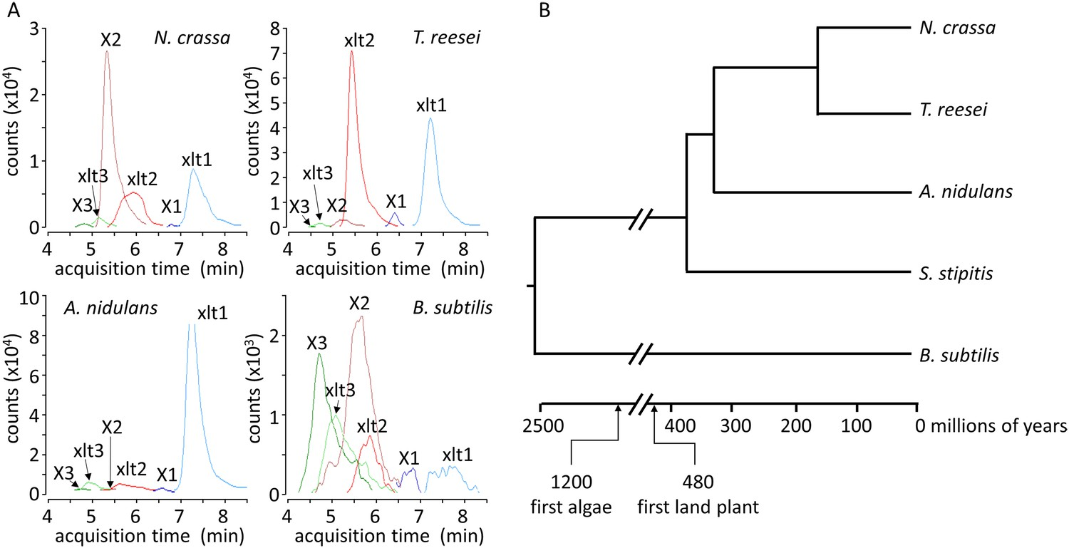 Expanding xylose metabolism in yeast for plant cell wall xylosyl xylitol and xylosyl xylosyl xylitol production by a range of microbes nvjuhfo Images