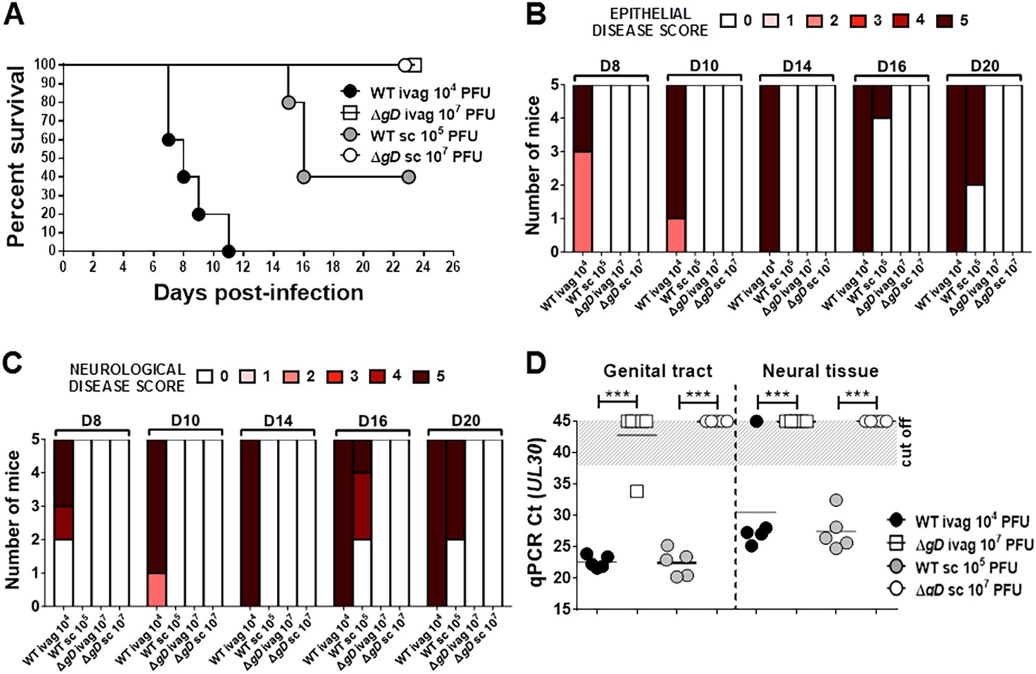 Herpes simplex type 2 virus deleted in glycoprotein D protects