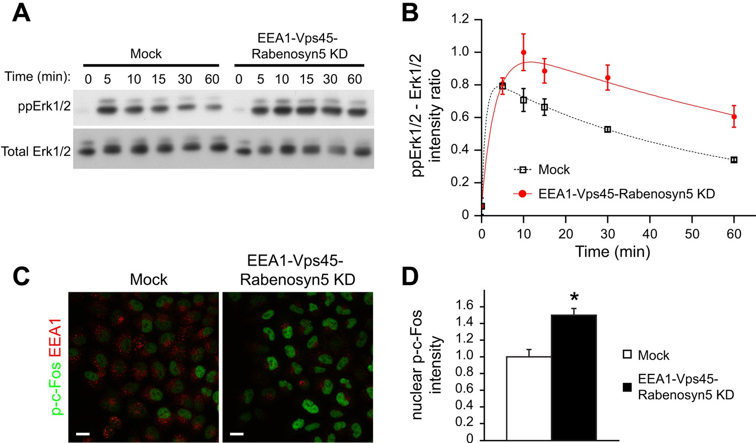 Regulation Of Egfr Signal Transduction By Analogue To Digital Ym 50 Wiring Schematic Redistribution Endosomal Increases The Amplitude And Duration Mapk Signalling