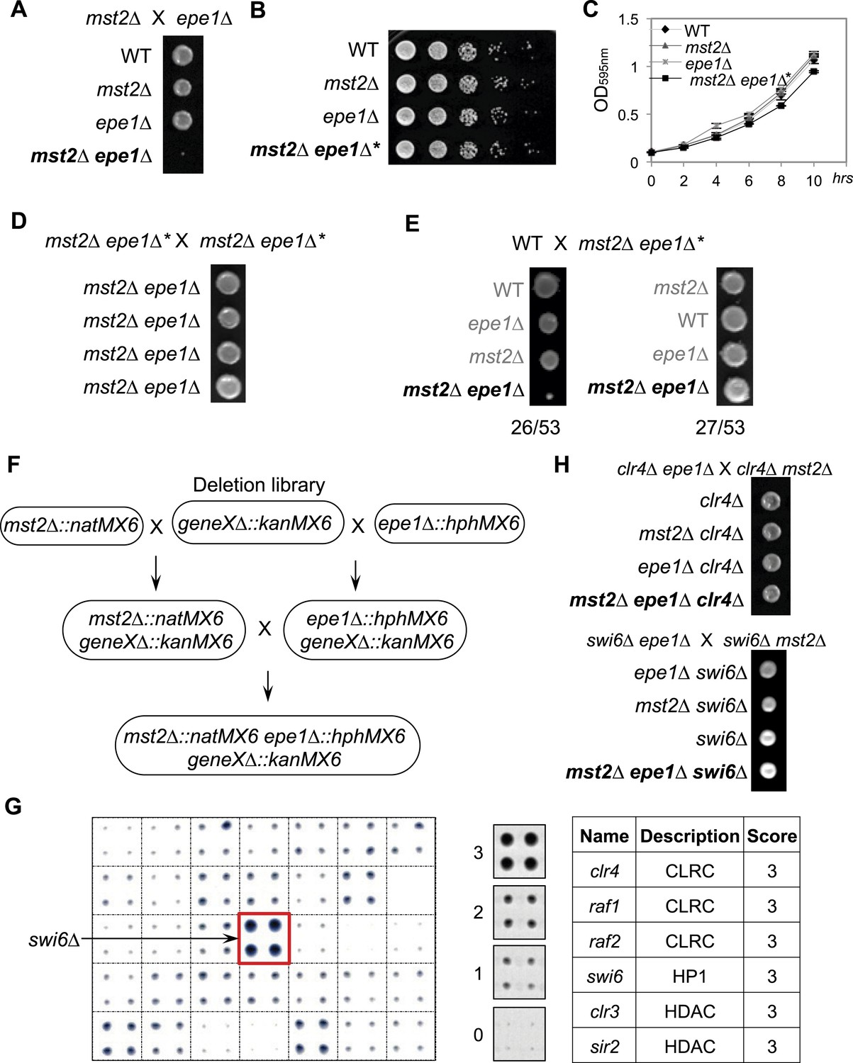 Figures and data in Rapid epigenetic adaptation to