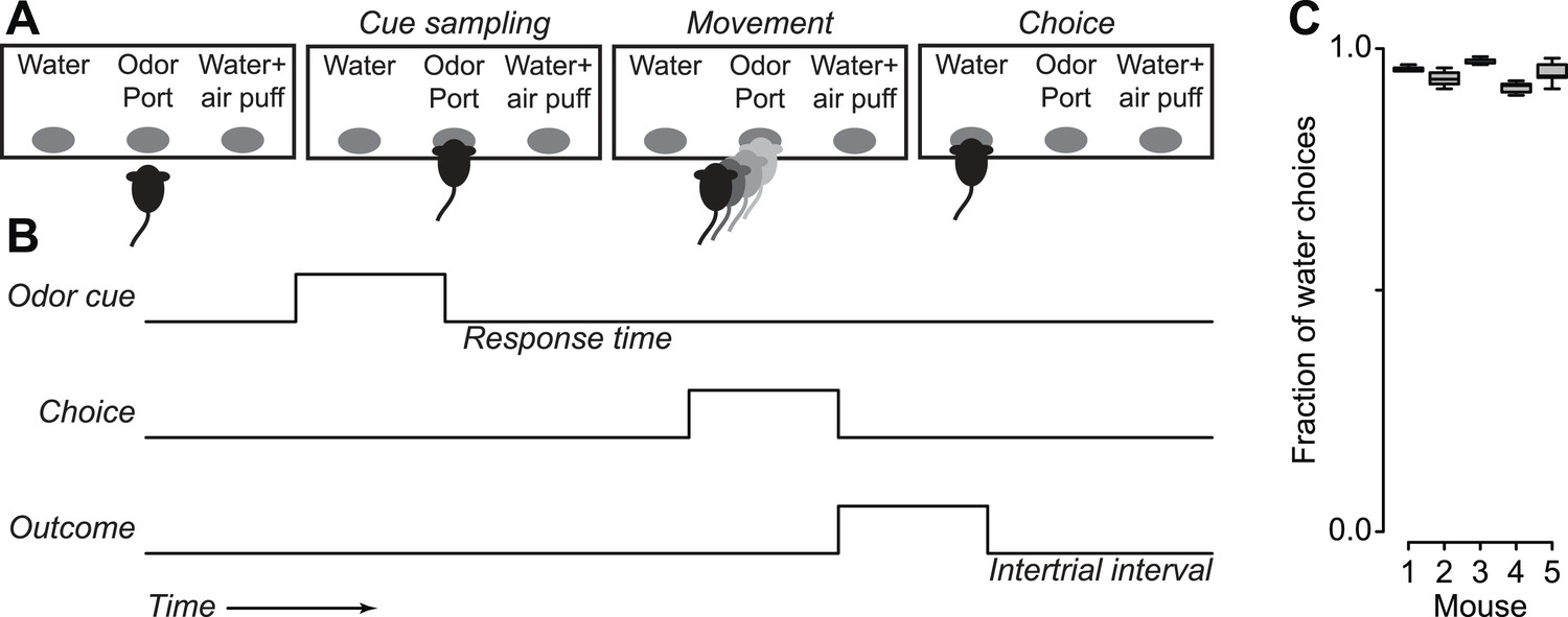 Serotonergic Neurons Signal Reward And Punishment On Multiple Pneumatic Electrical Logics Gets Outputs In Different Interval Mice Treat Air Puffs As Punishments