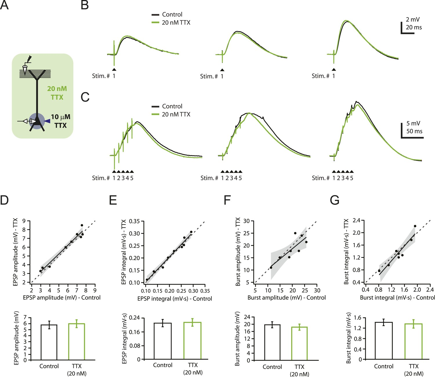 Dendritic Sodium Spikes Are Required For Long Term Potentiation At Diagram Besides Cav Injection Pump On Perkins Reducing Nav Channel Availability With 20 Nm Ttx Does Not Affect Synaptic Transmission Pp Ca1tuft Synapses