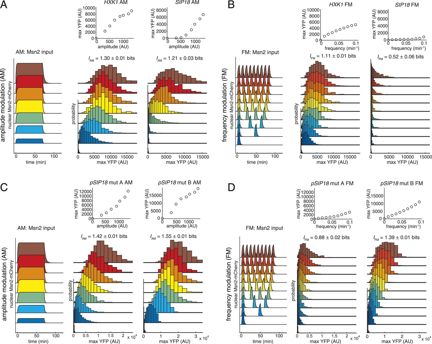Limits On Information Transduction Through Amplitude And Frequency Superlinear Fm Modulator By Promoters With Respect To Modulation