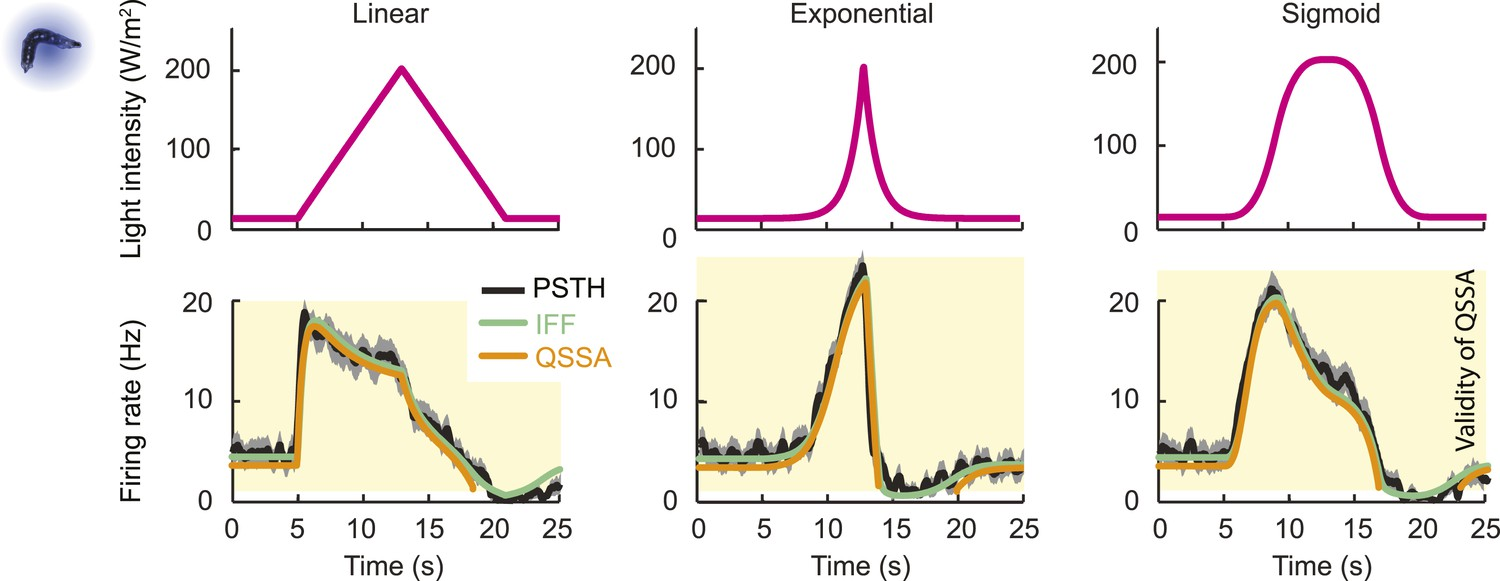 Dynamical feature extraction at the sensory periphery guides