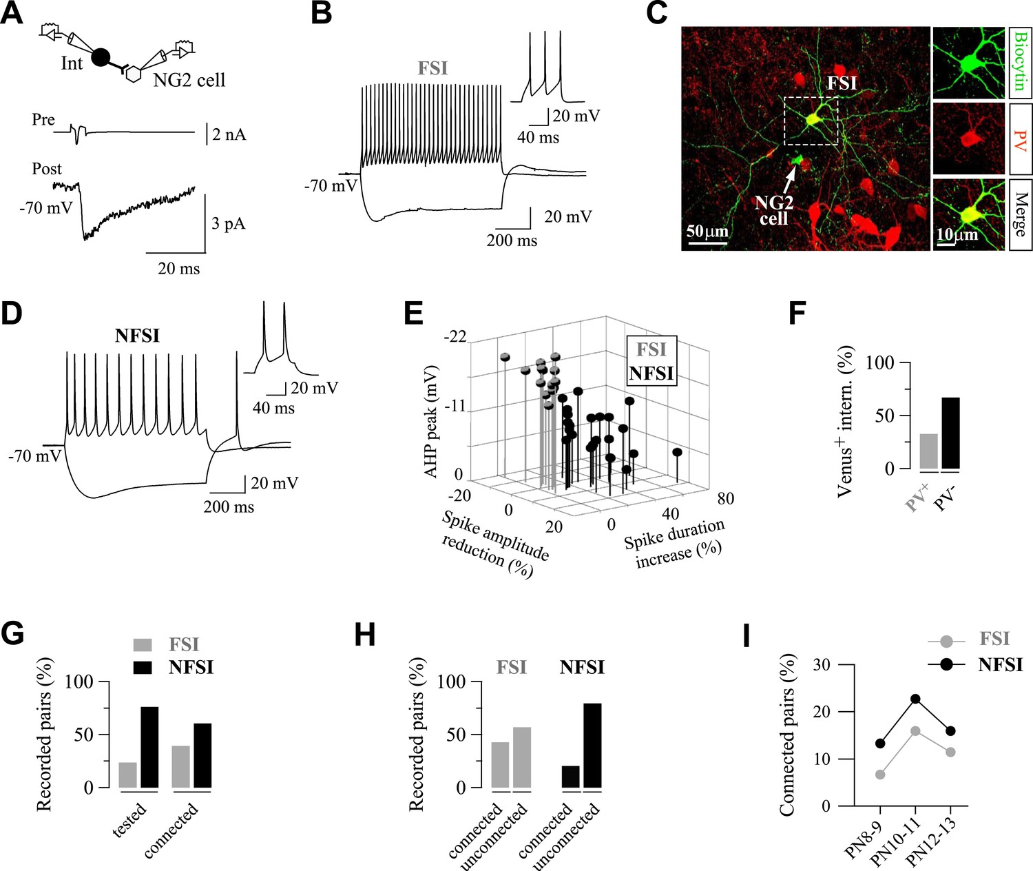 Interneurons And Oligodendrocyte Progenitors Form A Structured Variable Dc Power Supply Circuit Together With Top Circuits Page 707 Fsis Are Highly Connected To Ng2 Cells