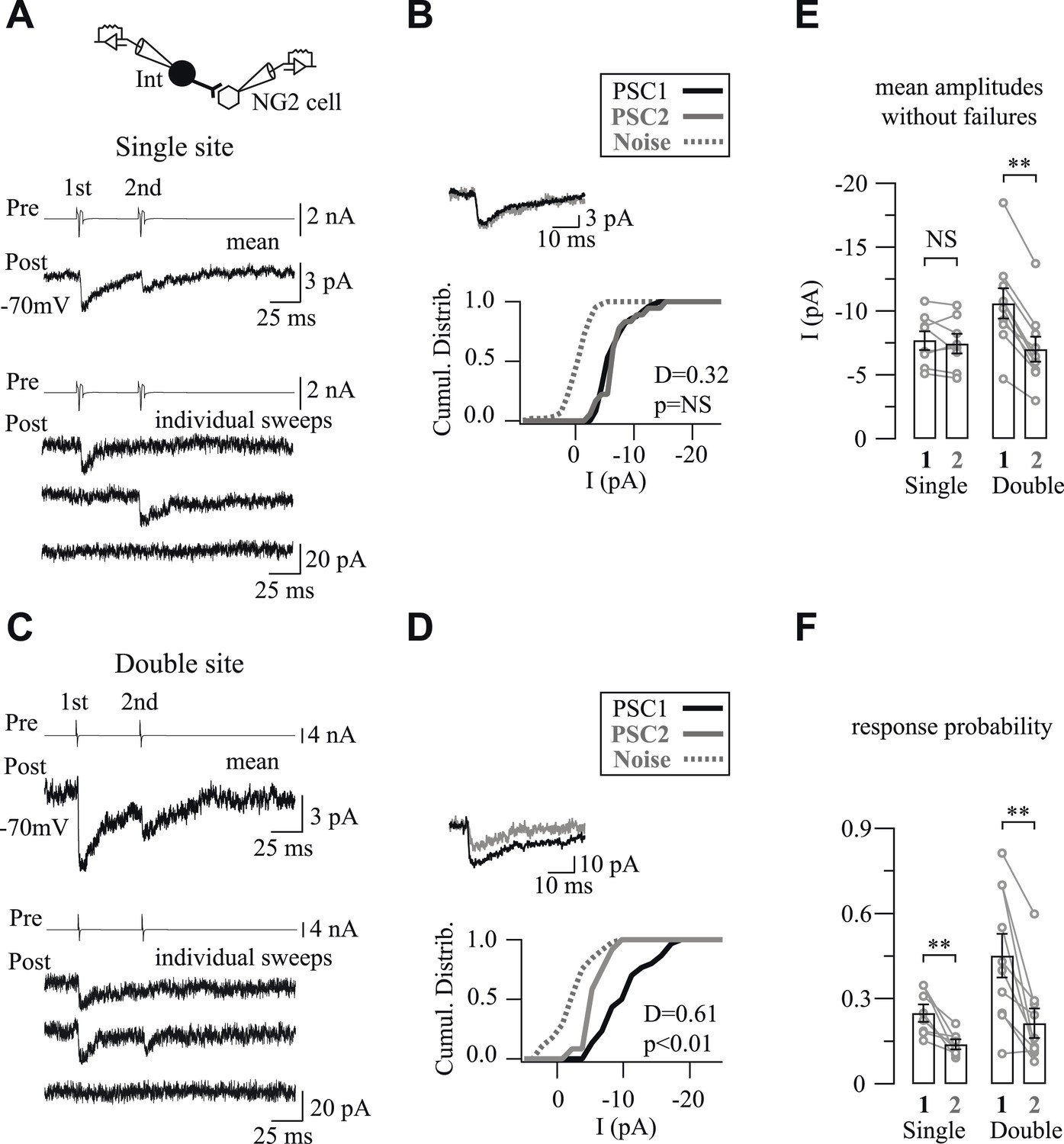 Interneurons and oligodendrocyte progenitors form a