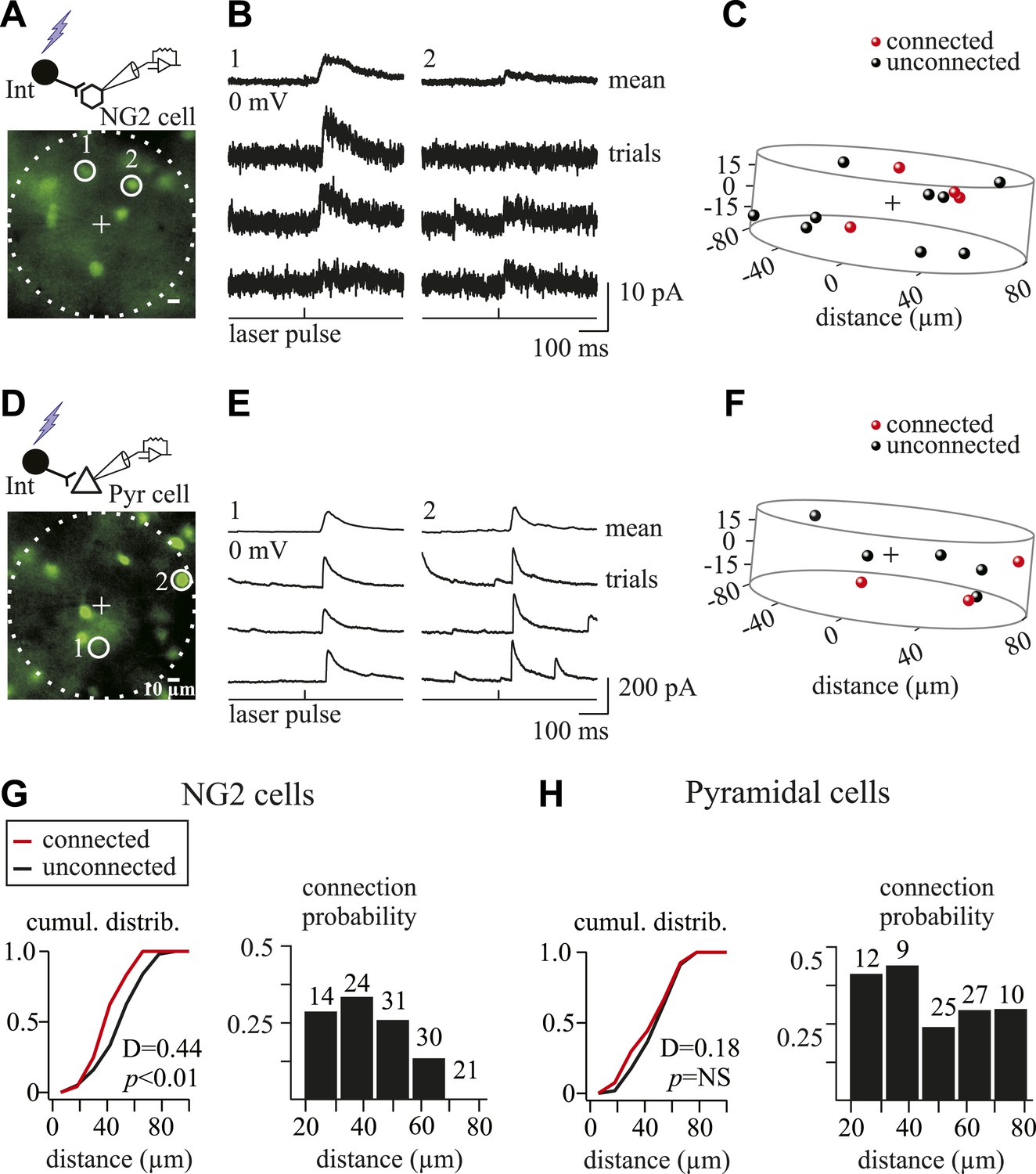 Interneurons And Oligodendrocyte Progenitors Form A Structured Technologyuk Physics Electrical Principles Measuring Current Gabaergic Connectivity Maps Of Ng2 Cells Pyramidal Neurons