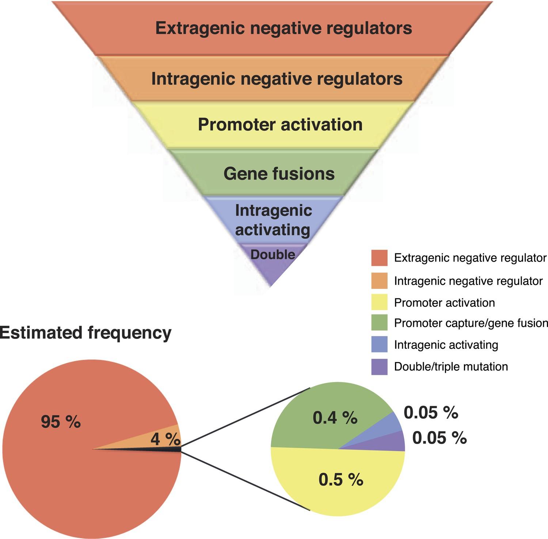 Experimental Evolution Reveals Hidden Diversity In Evolutionary Basis Of Different Regulator Types Principles Genetic Circuit Hierarchical Mutational Gene Activation