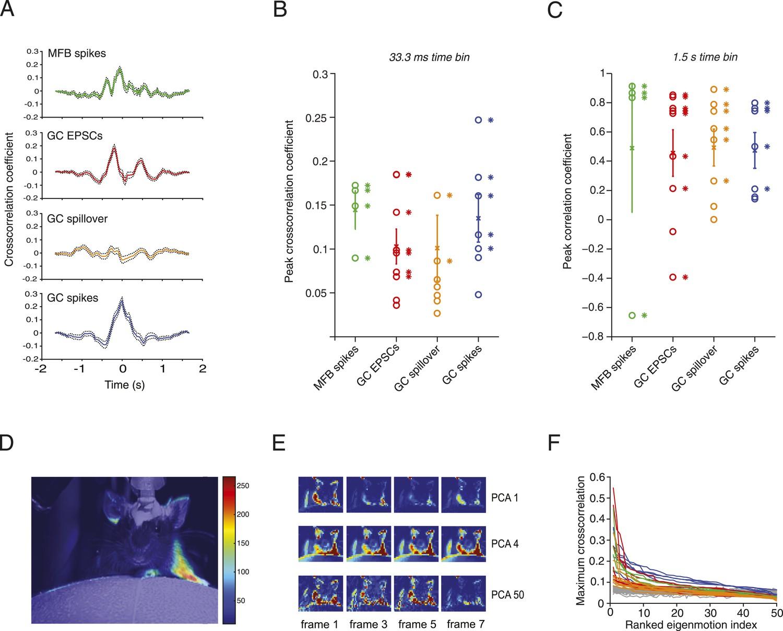 Synaptic representation of locomotion in single cerebellar granule ...