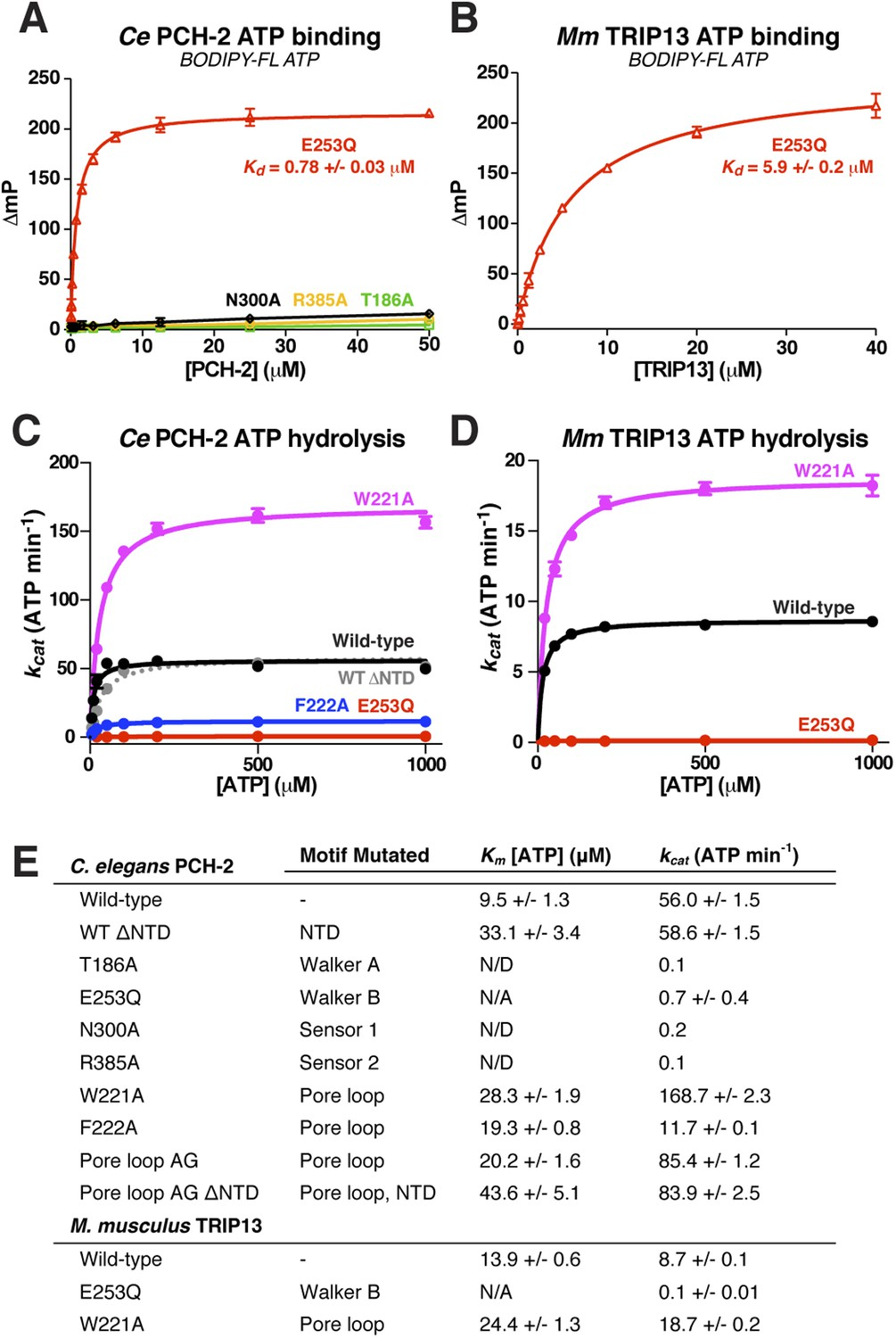 TRIP13 is a protein-remodeling AAA+ ATPase that catalyzes MAD2