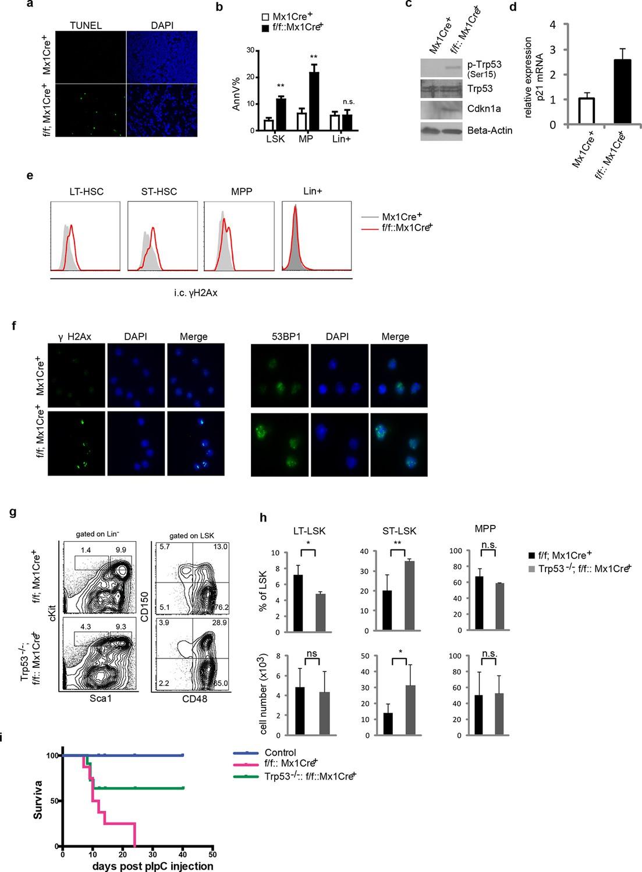 The CUL4-DDB1 ubiquitin ligase complex controls adult and