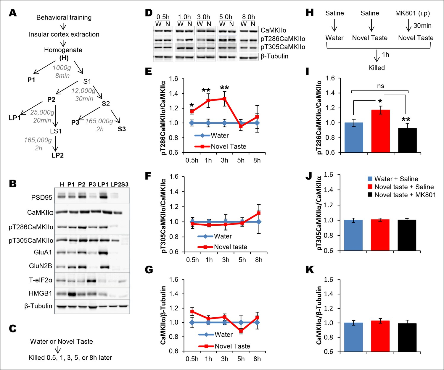 A Molecular Mechanism Underlying Gustatory Memory Trace For An Cascaded Form C Dry Contact Wiring Schematic Novel Taste Experience Induces Camkii Phosphorylation In The Ic Nmdar Dependent Manner