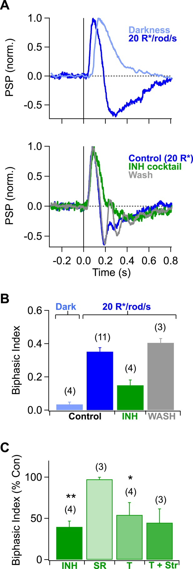 A Simple Retinal Mechanism Contributes To Perceptual Interactions