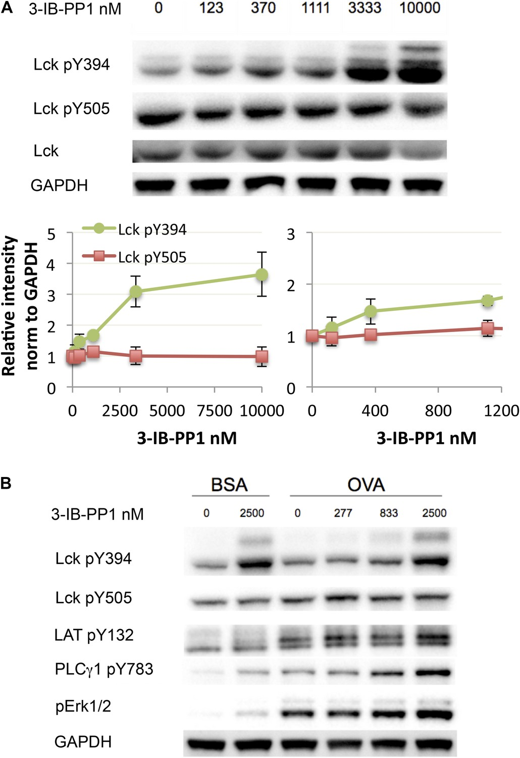 Small molecule inhibition of Csk alters affinity recognition