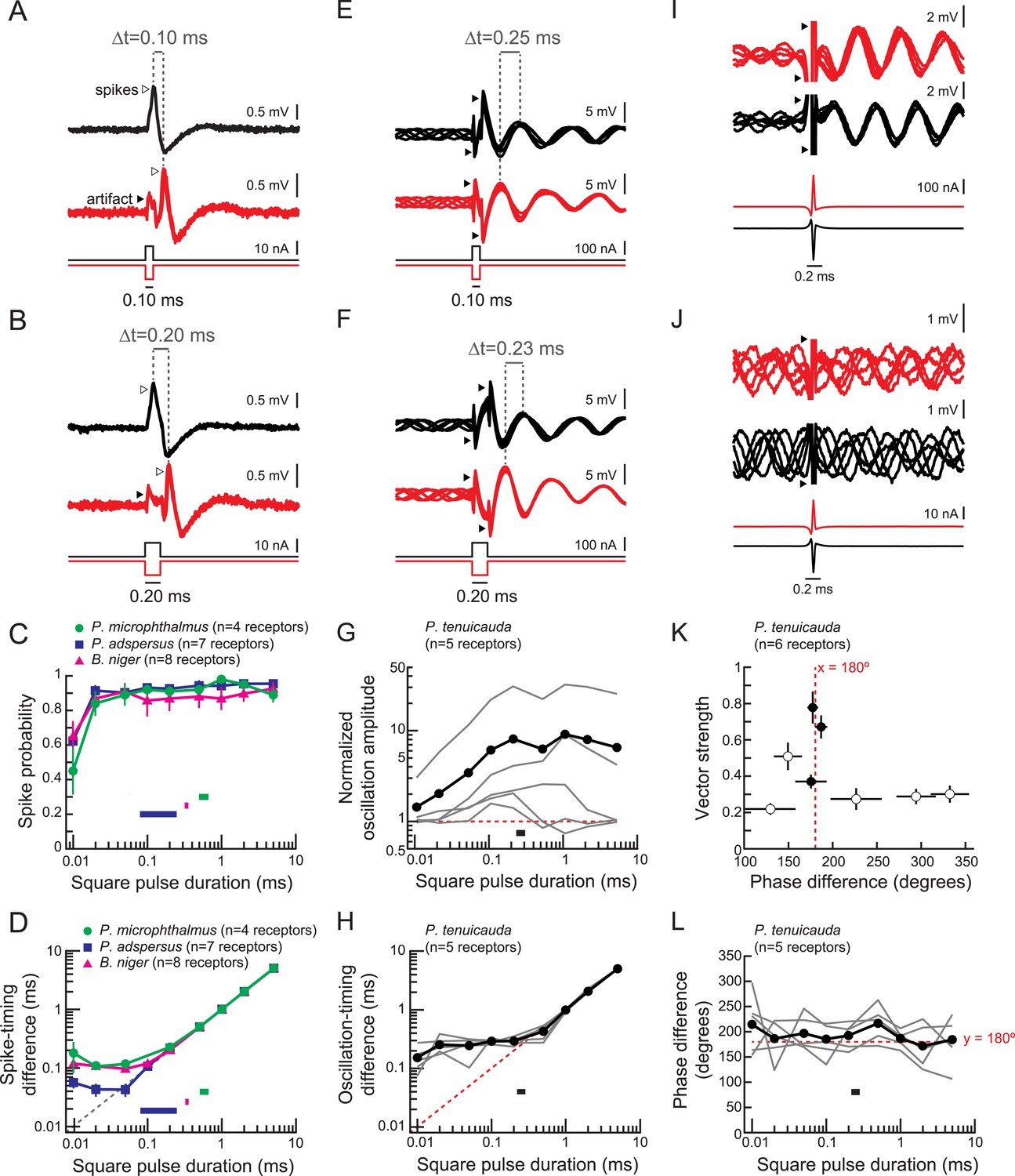 Peripheral Sensory Coding Through Oscillatory Synchrony In Weakly Anatomy Of A Short Circuit Open Electrical Download Asset