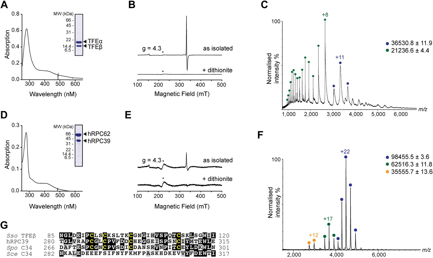 Archaeal TFEα/β is a hybrid of TFIIE and the RNA polymerase