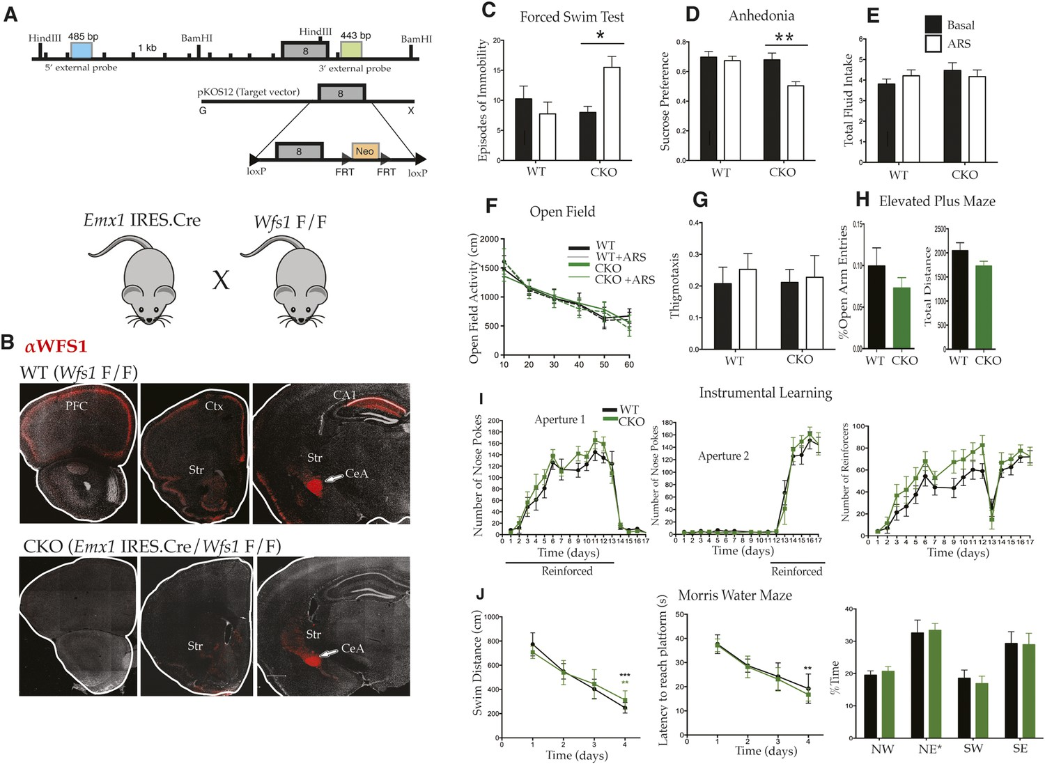 Layer 2/3 pyramidal cells in the medial prefrontal cortex moderate ...