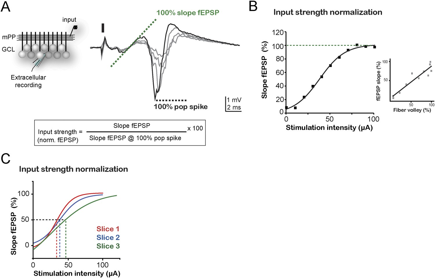 Differential Inhibition Onto Developing And Mature Granule Cells Cap Discharge Circuit O27 Switch Input Normalization