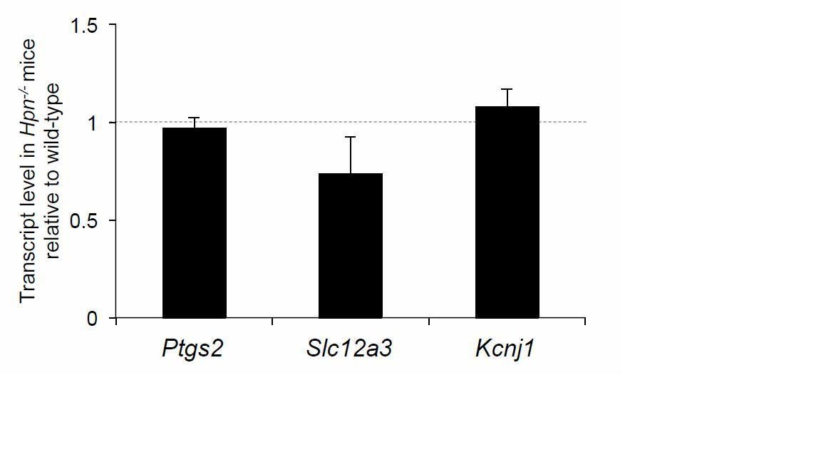 The serine protease hepsin mediates urinary secretion and