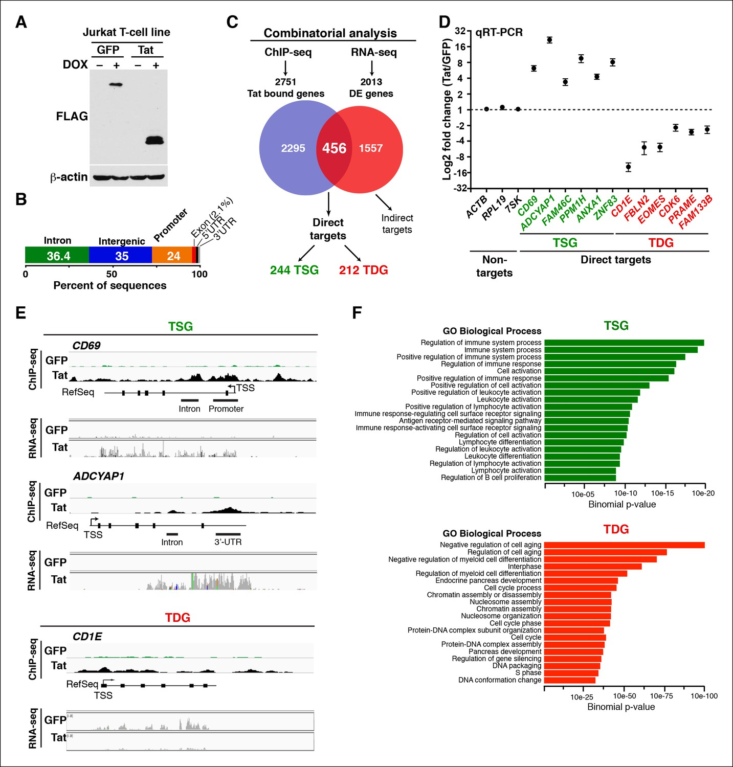 HIV Tat controls RNA Polymerase II and the epigenetic landscape to ...