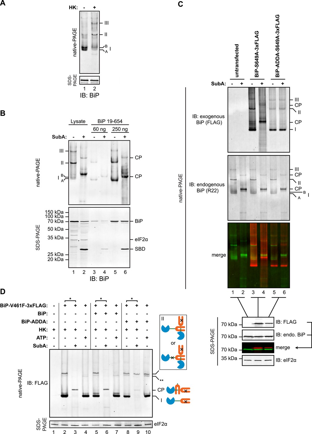 Physiological Modulation Of Bip Activity By Trans Protomer Cde Ham Iii Wiring Diagram Engagement The Linker Substrate Binding Domain Sbd As Basis For Oligomerization In Vivo