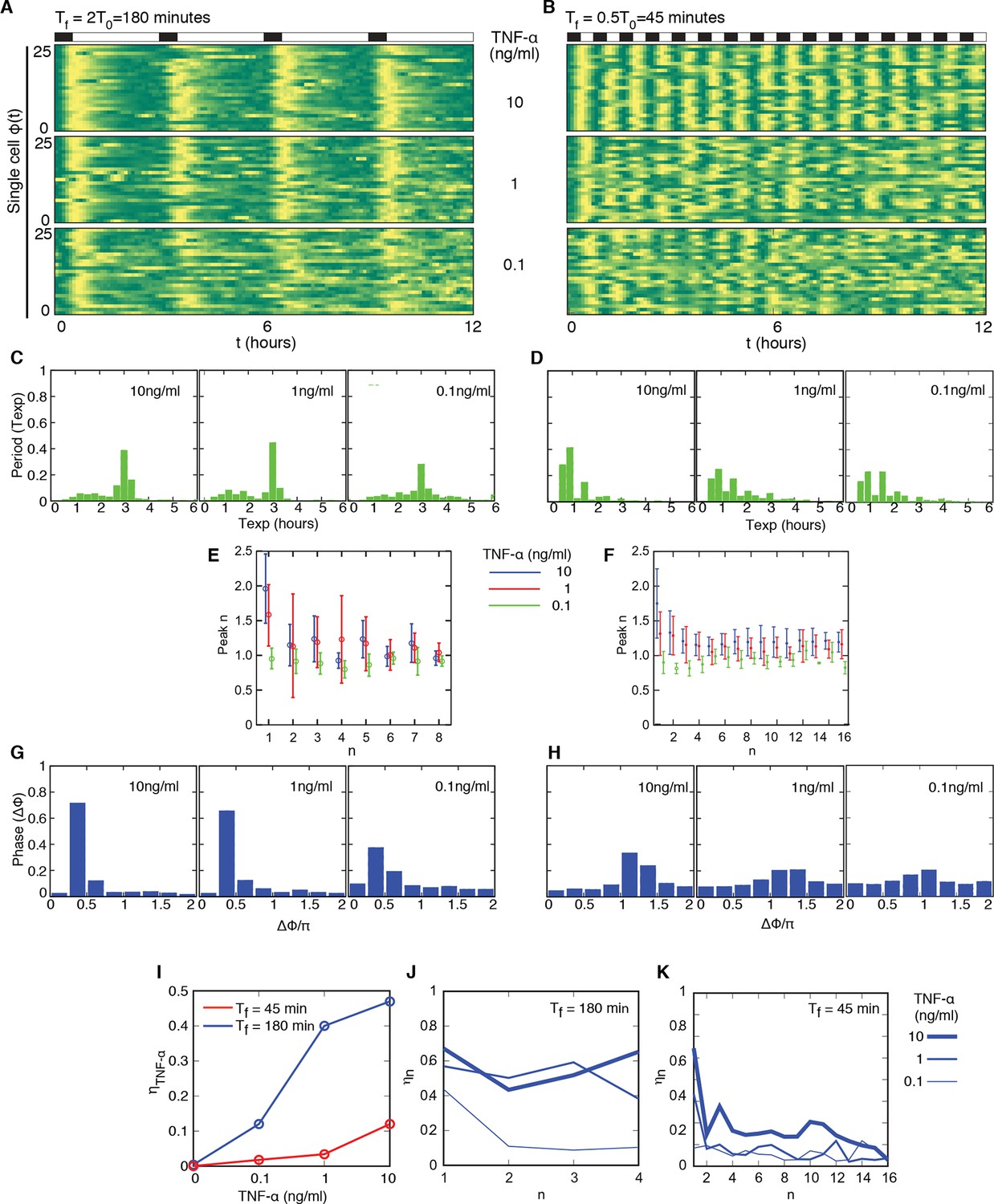 Nf B Oscillations Translate Into Functionally Related Patterns Of Inductive Proximity Sensor Comprising A Resonant Oscillatory Circuit Cells Adjust To Different Periods For Wide Range Forcing Amplitudes