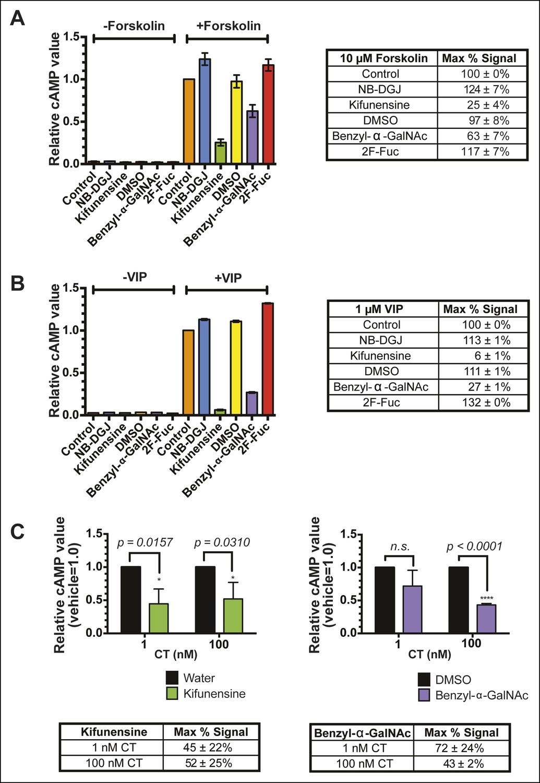 Fucosylation and protein glycosylation create functional receptors