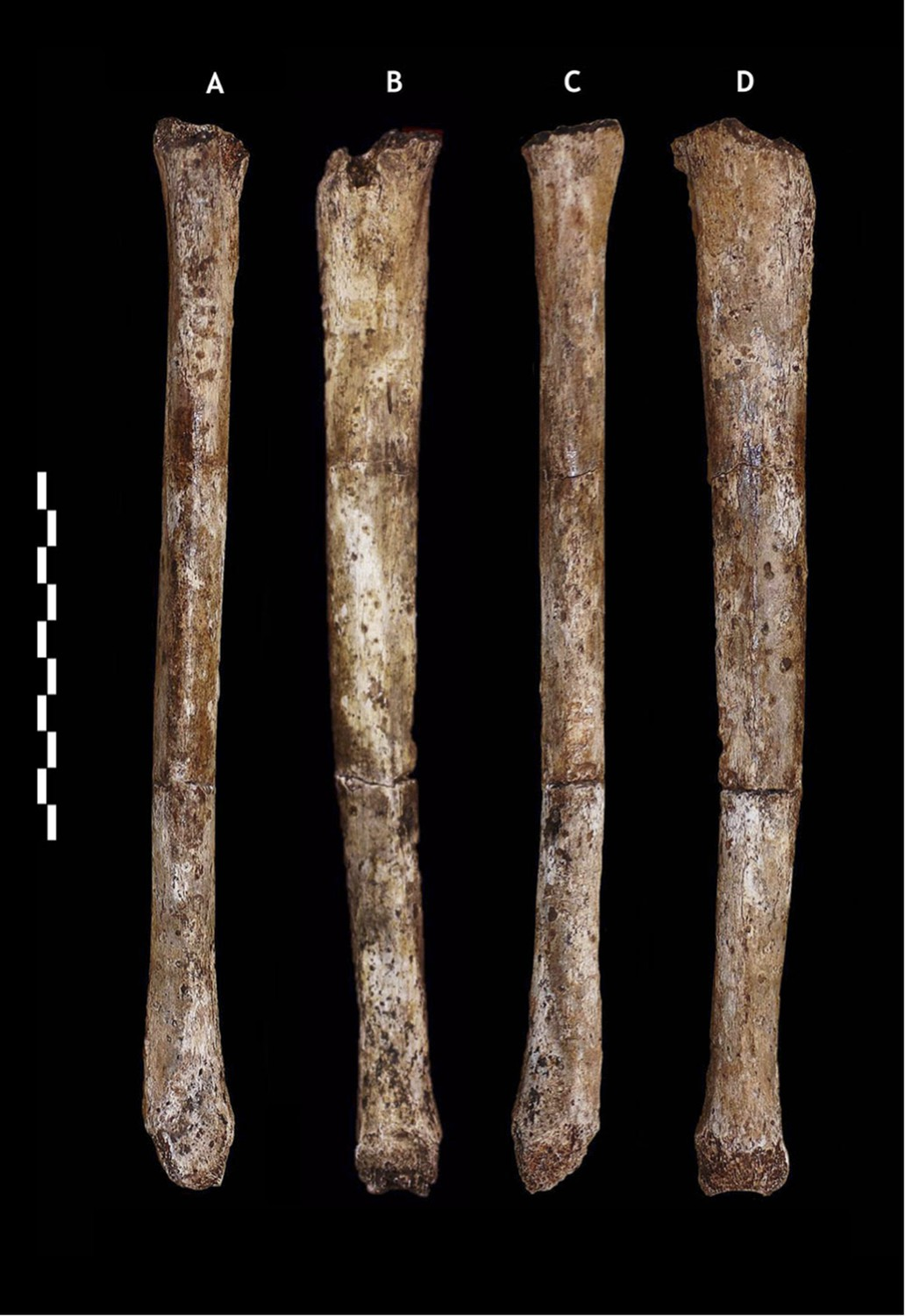Homo naledi, a new species of the genus Homo from the
