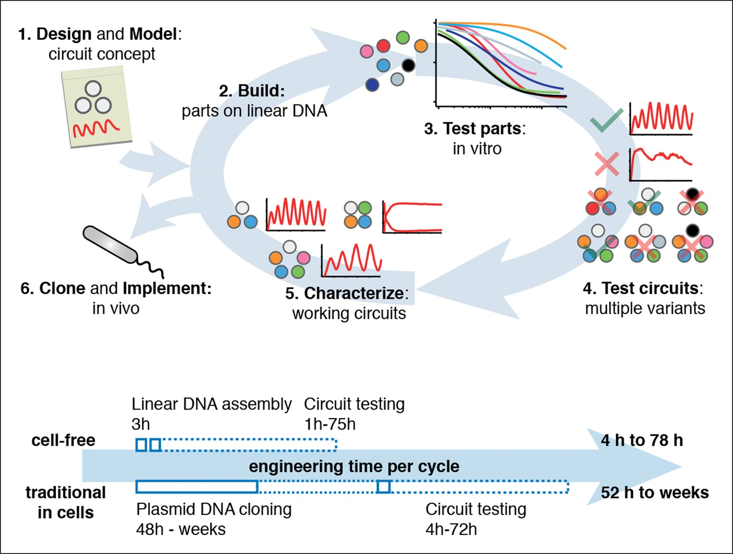 Rapid Cell Free Forward Engineering Of Novel Genetic Ring What Are Parallel Circuit Systems Allow And Extensive Characterization Biological
