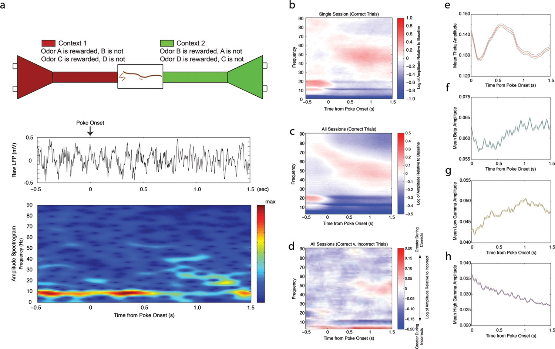 Rhythmic Coordination Of Hippocampal Neurons During Associative 66 Block Wiring Diagram 25 Pair Changes In Theta 412 Hz Beta 1535 Low Gamma 3555 And High 6590 Amplitude Odor Sampling Intervals