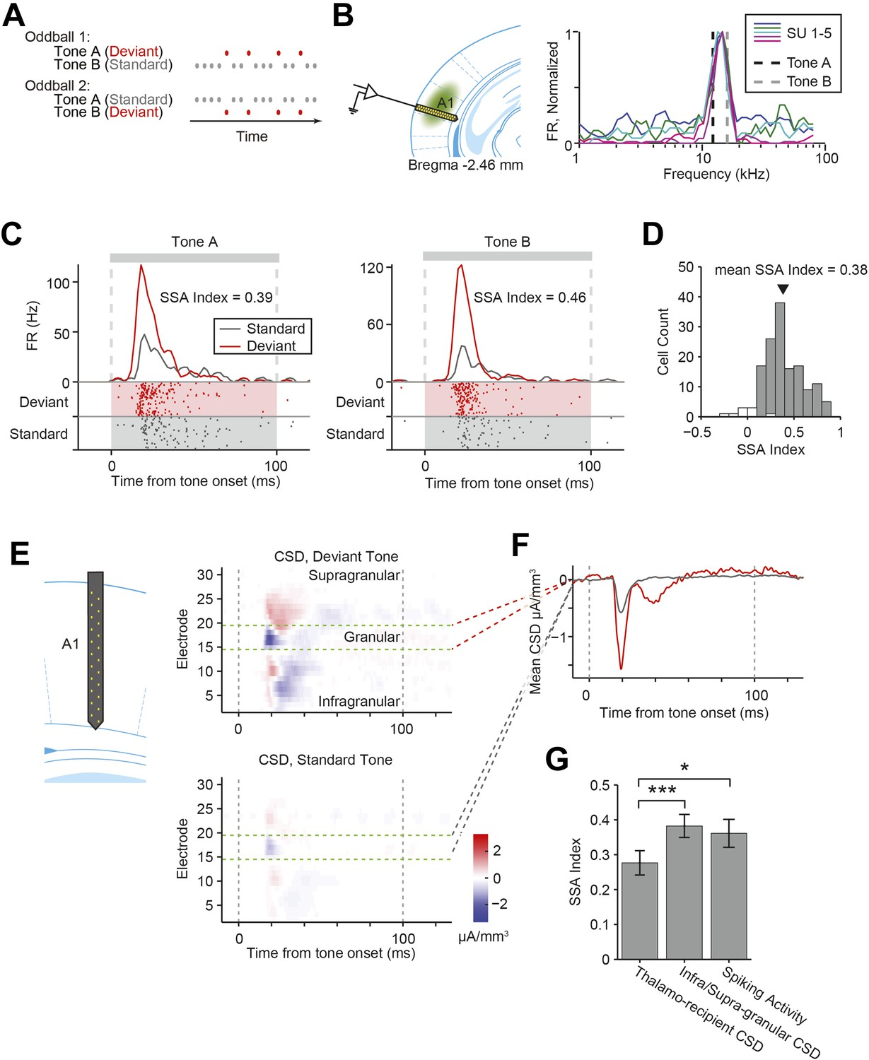 Complementary Control Of Sensory Adaptation By Two Types Cortical Dual Tone Train Horn Circuit Nearly All Recorded A1 Neurons Exhibit Stimulus Specific