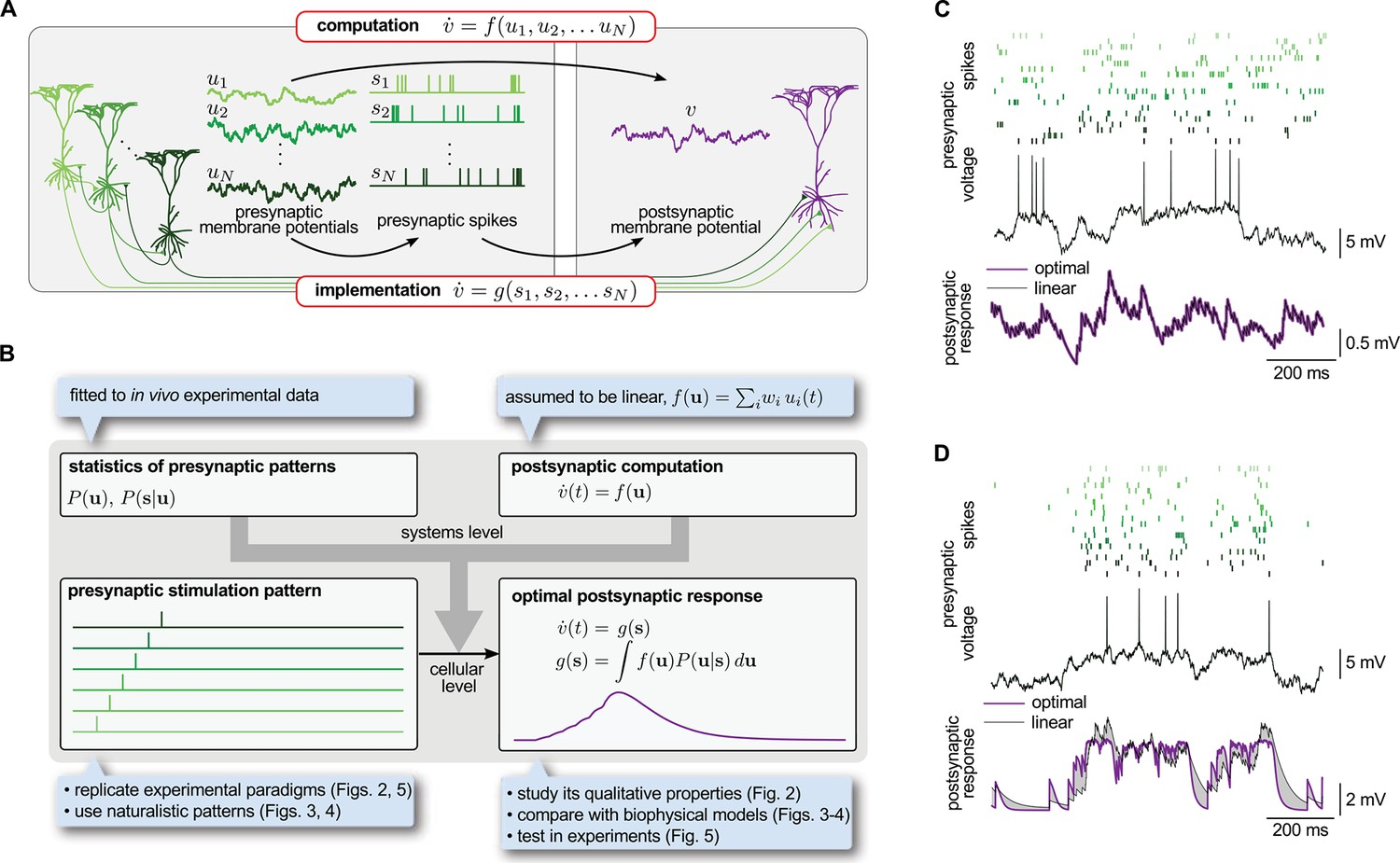 Dendritic Nonlinearities Are Tuned For Efficient Spike Based The Circuit Description Of Present Can Be Understood Implementation Analogue Computations In Neural Circuits