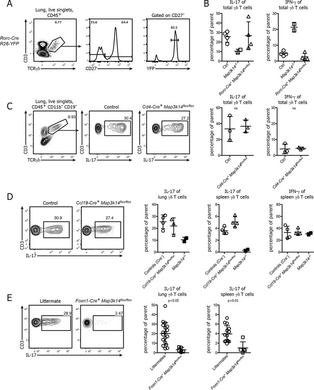 The NFκB-inducing kinase is essential for the ...