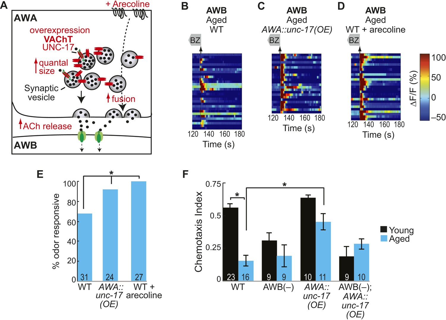 Circuit Mechanisms Encoding Odors And Driving Aging