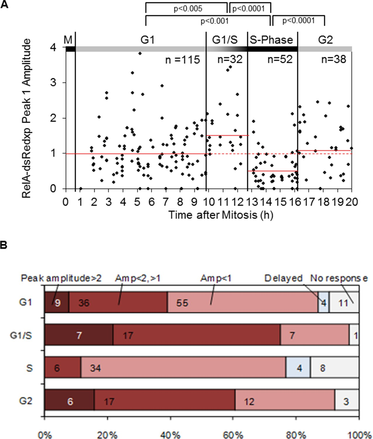 Dynamic Nf B And E2f Interactions Control The Priority Timing Four Diagrams A C D Representing Stages Of Stroke Statistical Analysis Translocation In Hela Cells At Inferred Cell Cycle Following 10 Ng Ml Tnf Stimulation