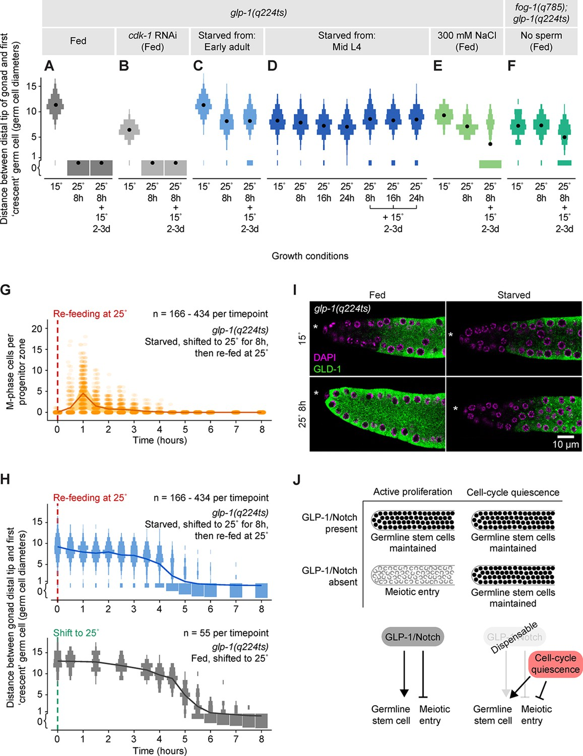 Cell Cycle Quiescence Maintains Caenorhabditis Elegans Germline Stem No Disassemble Johnny 5is Alive Induced By Three Different Conditions Cells Independent Of Glp 1 Notch