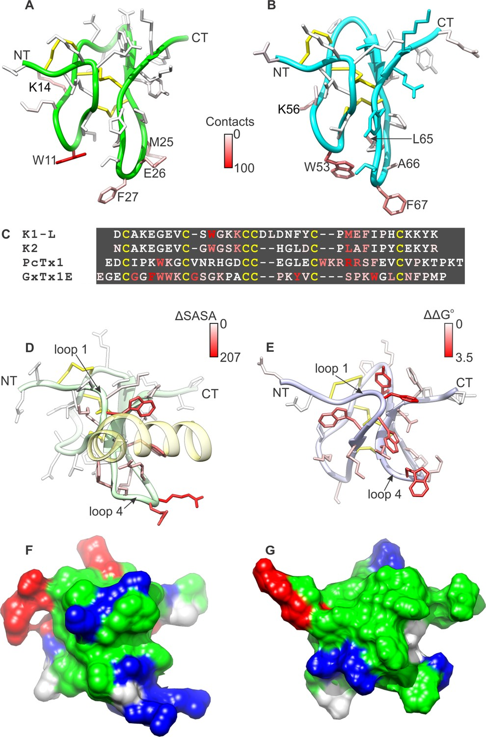 Structural insights into the mechanism of activation of the TRPV1