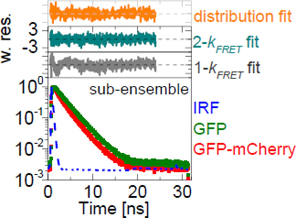 Comprehensive characterizations of FRET-FLIM data.