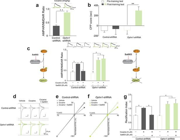 Translational Control By Eif2 Phosphorylation Regulates