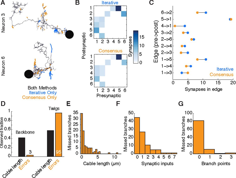 Quantitative neuroanatomy for connectomics in Drosophila | eLife