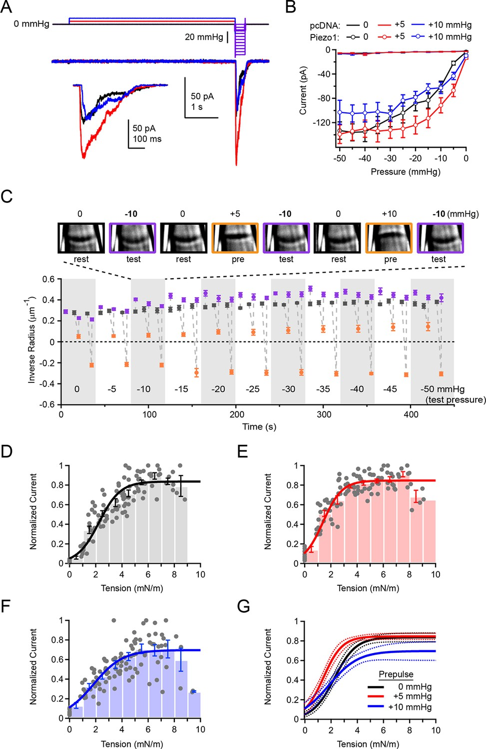 Mechanical Sensitivity Of Piezo1 Ion Channels Can Be Tuned By Schumacher Se 1520 Wiring Diagram Overall Is Regulated Resting Membrane Tension