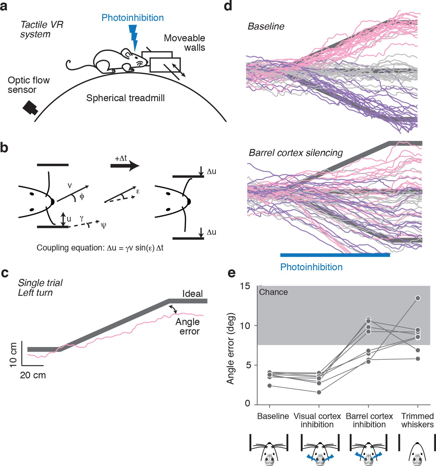 Neural coding in barrel cortex during whisker-guided