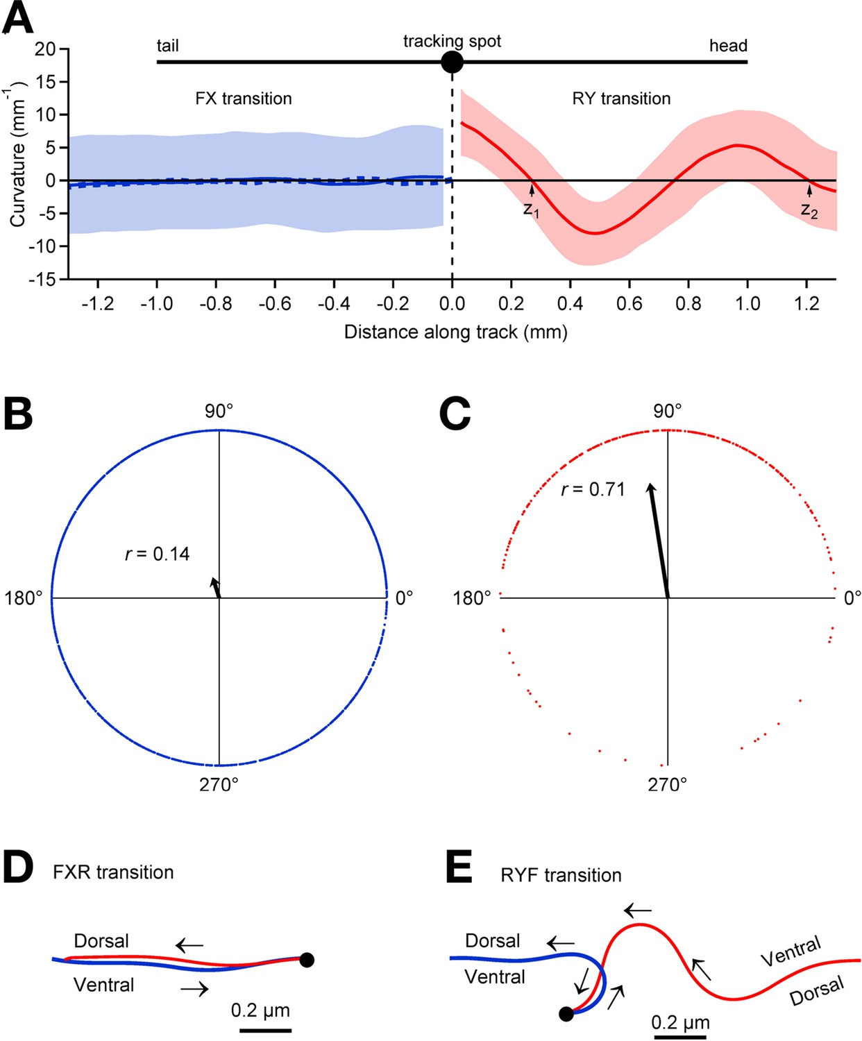 A Stochastic Neuronal Model Predicts Random Search Behaviors At An Rc Integrator Is Circuit That Approximates Themathematical Relationship Between Pauses And Posture