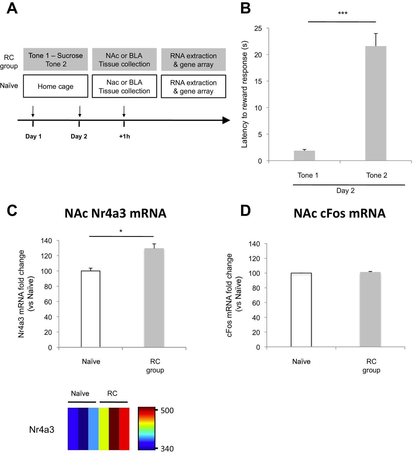 Amygdala Ventral Striatum Circuit Activation Decreases Long Term Pc Zone National Institutions Design All Versions Keygen Microarray Analysis Of The Nac After Reward Conditioning In Rats