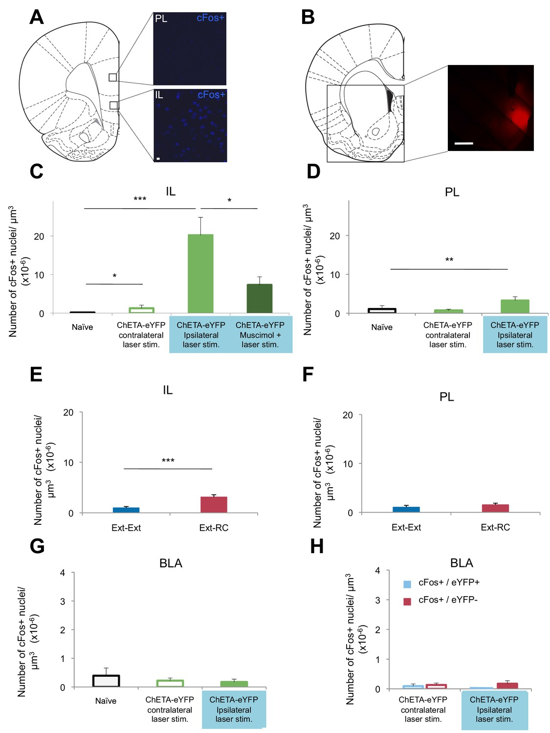 Amygdala Ventral Striatum Circuit Activation Decreases Long Term Increasing The Number Of Lamps In A Series Results Less Optogenetic Stimulation An Nac Or Reward Conditioning During Fear Extinction Increases Activity Il