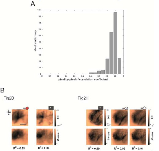 Probing the functional impact of sub-retinal prosthesis | eLife