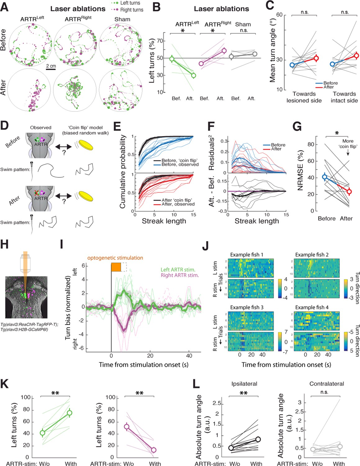 Brain Wide Mapping Of Neural Activity Controlling Zebrafish Follow The Colors On Schematic And Description Text Artr Biases Turn Direction
