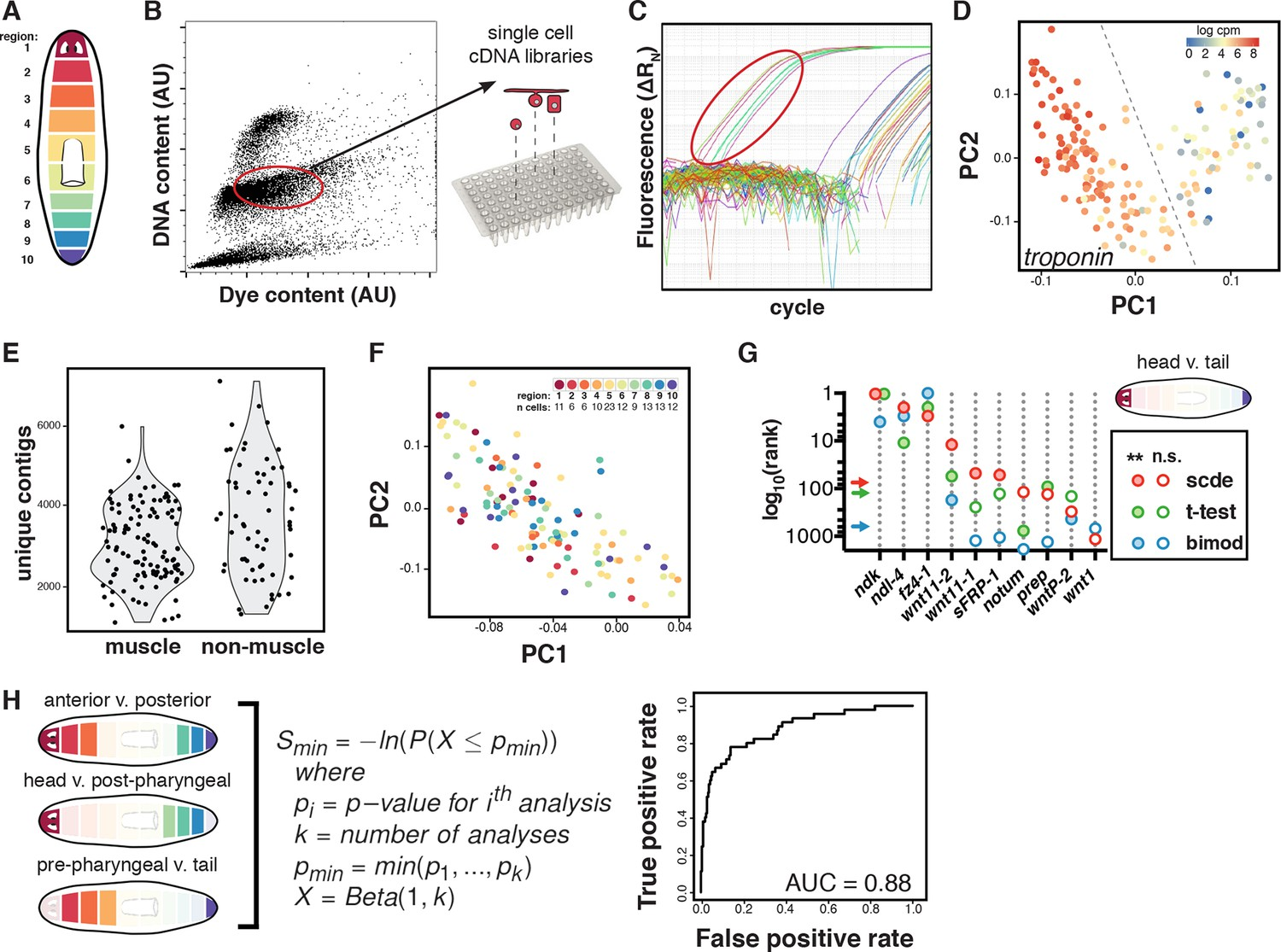 Two Fgfrl Wnt Circuits Organize The Planarian Anteroposterior Axis Cool Puts Your Brain Muscle To Test Single Cell Sequencing And Analysis