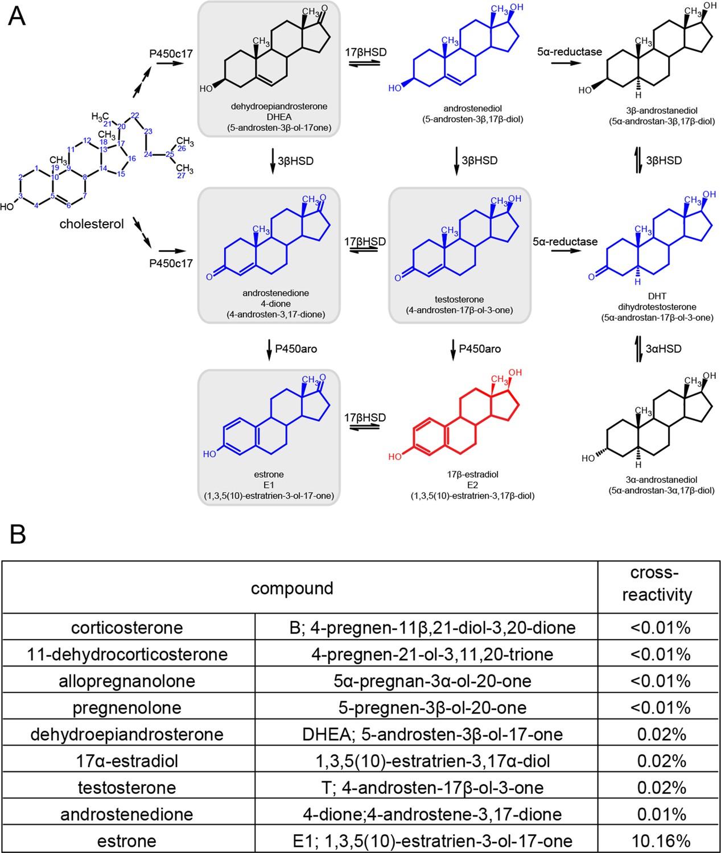 neurosteroid synthesis