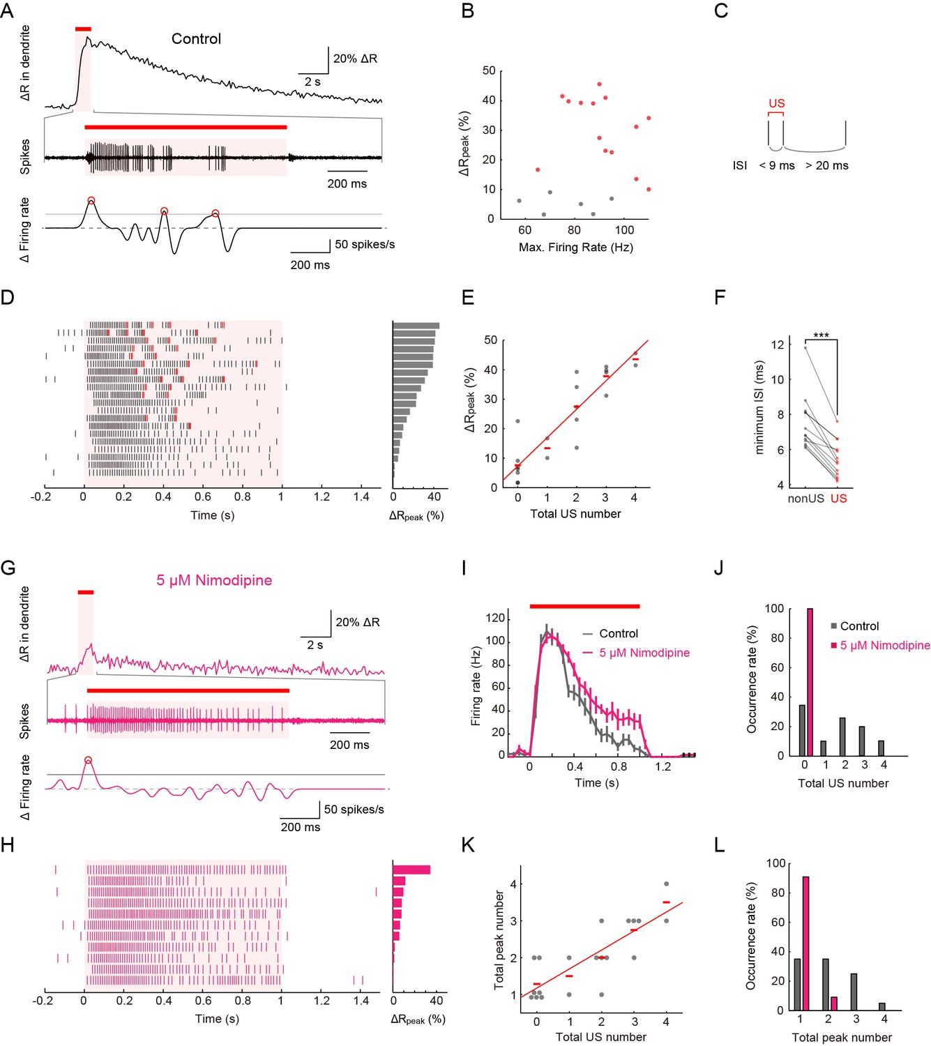 Neuronal processing of noxious thermal stimuli mediated by